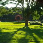 Qigong-Dahliengarten Bad Neuenahr